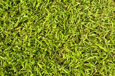 Free Green Grass Texture Royalty Free Stock Photos - 25262488
