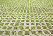 Free Grass In The Brick Walkway. Royalty Free Stock Photo - 25266915