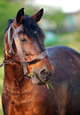 Free Brown Horse Eating Grass Stock Photo - 25270260