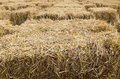 Free Field With Bales Of Hay Stock Image - 25271701
