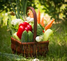 Free Vegetables Stock Photo - 25271290