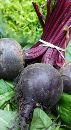 Free Bunch Of Beetroot Stock Photos - 25277883