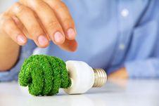 Eco Light Bulb Stock Photography