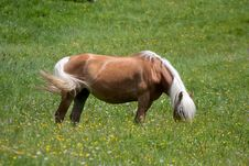 Free Horse Eating Grass Stock Images - 25279884