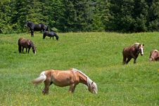 Free Horses On Green Grass Stock Photography - 25279922