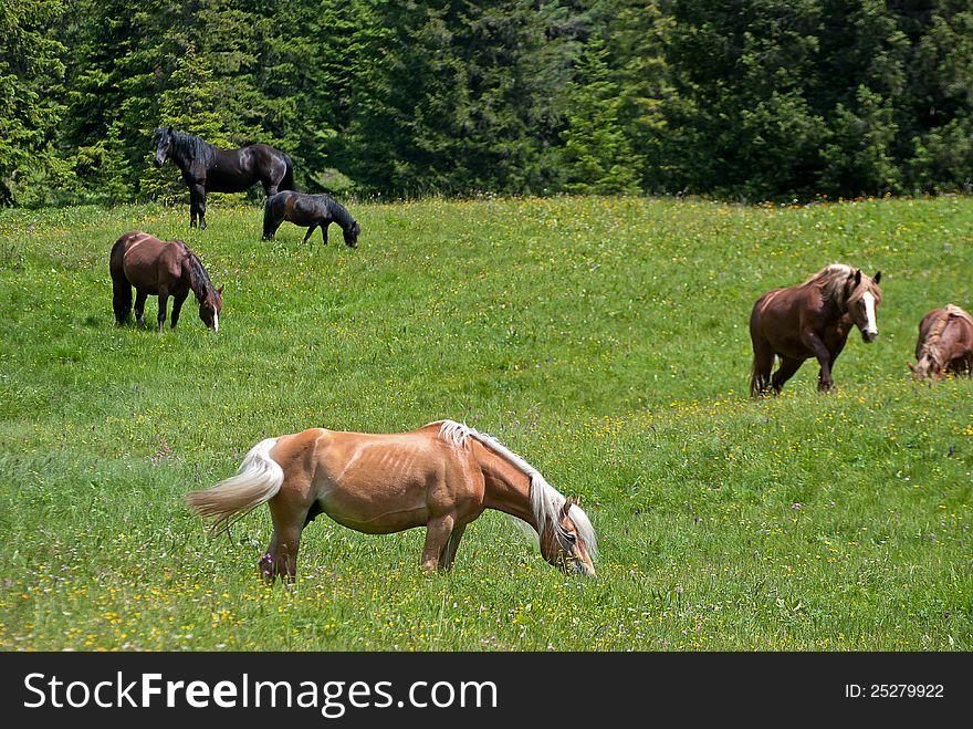 Horses on green grass