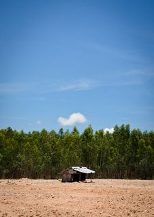 Free Alone Hut On Ground Forest Royalty Free Stock Photography - 25280527