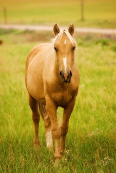 Free Horse In The Field Royalty Free Stock Photos - 25283648
