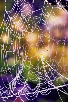 Free Cobwebs In The Dew Royalty Free Stock Photo - 25284295