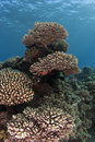 Free Coral Garden Underwater - Corals Tower Royalty Free Stock Image - 25299456