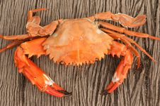 Free Some Kind Of Crab Royalty Free Stock Images - 25290649