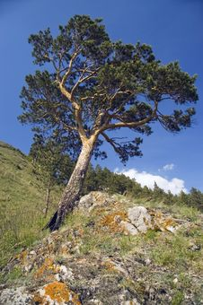 Free Blue Sky And Green Tree. Royalty Free Stock Photography - 25297907