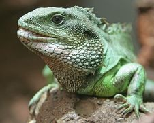 Chinese Water Dragon 5 Royalty Free Stock Photo