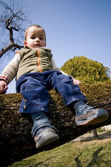 Child Sitting On Tree Royalty Free Stock Images
