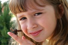 Free Pretty Moth Royalty Free Stock Photography - 2532177