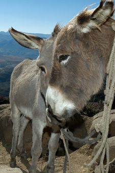 Free Donkeys Two 2 Royalty Free Stock Photo - 2534635