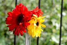 Free Red And Yellow Flowers Stock Images - 2535834
