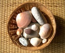 Free Pebbles And Shells Stock Images - 2536654