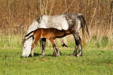 Free Horse Family Stock Image - 25300471