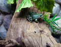 Free Bright Green Frog Royalty Free Stock Photo - 25318565
