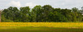 Free Field Of Yellow Flowers Stock Photography - 25319052