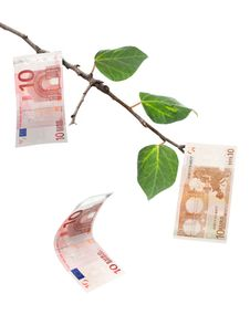 Free Money Tree Stock Photo - 25313800