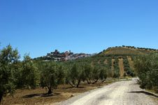Free Andalusian Landscape With Olives Trees. Stock Photography - 25314212