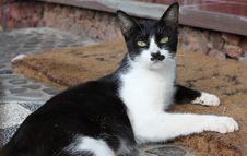 Free Black And White Cat Stock Photo - 25316540