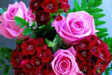 Free Pink Rose Stock Images - 25317184