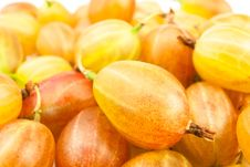 Free Gooseberry Royalty Free Stock Image - 25317336