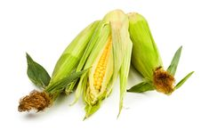 Free Corn Group Stock Image - 25317371