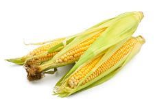 Free Corn Group Royalty Free Stock Photos - 25317378