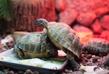 Free Two Turtles In City Zoo Stock Image - 25318591