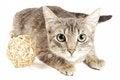 Free Gray Kitten Stock Image - 25320671
