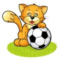 Free Cat With Soccer Ball Stock Image - 25326011