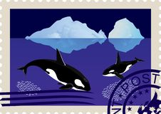 Postage Stamp With Killer Whales Royalty Free Stock Photography
