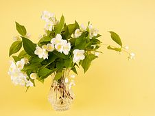 Free Jasmin Bouquet Royalty Free Stock Images - 25327829