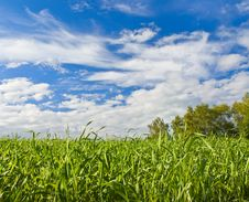 Free Green Grass Royalty Free Stock Photography - 25330407