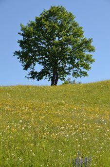 Free Tree Hill Stock Photos - 25331473