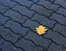Free Lone Leaf On The Ground Stock Image - 25334791