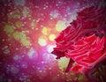 Free Rose In Dark Background Stock Photos - 25340843