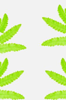 Free Fern Leaves Wallpaper Royalty Free Stock Photography - 25340907
