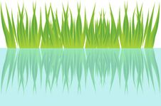 Free Grass And Water Royalty Free Stock Photography - 25344307