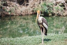 Free Painted Stork Stock Photos - 25345513