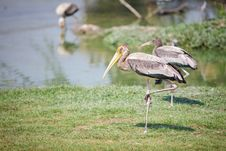 Free Painted Stork Royalty Free Stock Photos - 25345538