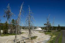 Free Yellowstone National Park Royalty Free Stock Photo - 25347345