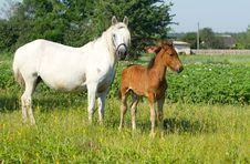 Free Mother And Baby Horse Stock Photography - 25348282