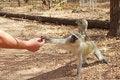 Free Human Feeding Monkey Fruit Royalty Free Stock Photography - 25356787