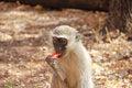 Free Human Feeding Monkey Fruit Royalty Free Stock Photos - 25356888
