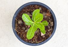 Young Green Seedling Royalty Free Stock Photography